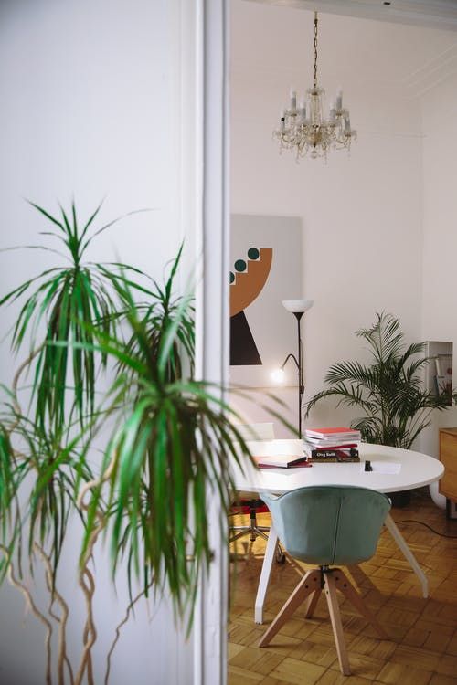 Green Indoor Plant Beside a Round White Table