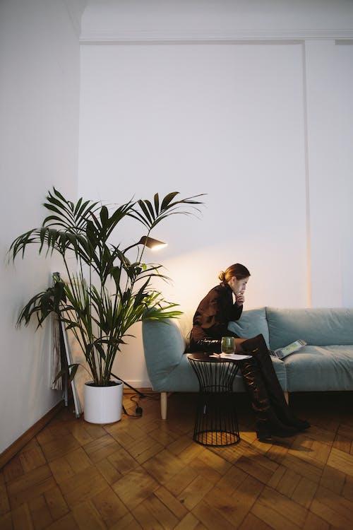 açık, ahşap, ahşap döşeme, bitki içeren Ücretsiz stok fotoğraf