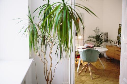 Foto profissional grátis de cadeira, cátedra, cômodo, dentro de casa