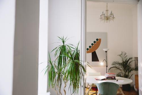 Foto d'estoc gratuïta de apartament, cadira, contemporani, disseny d'interiors