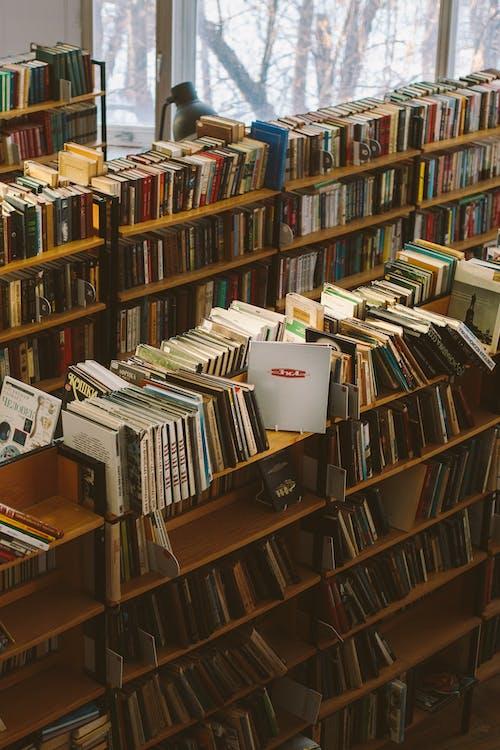 Kostenloses Stock Foto zu ausbildung, bibliothek, bildung, bücher