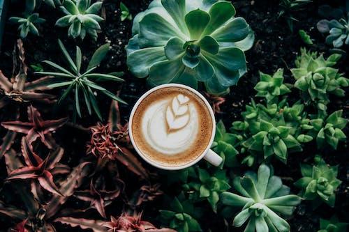 Δωρεάν στοκ φωτογραφιών με latte art, ανάπτυξη, αφρός, βοτανικός