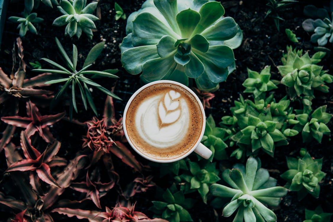 Coffee Latte Near Green Plant