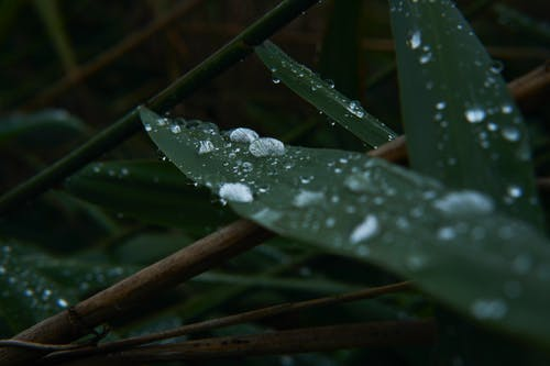 Free stock photo of drop of water, drops, forest