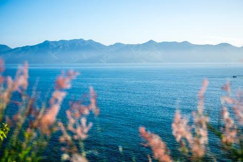 barışçıl, Çevre düzenleme, deniz, sahiller içeren Ücretsiz stok fotoğraf
