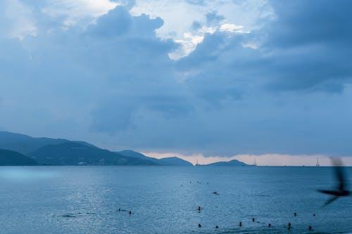 deniz, deniz kuşu, sahiller, seyahat içeren Ücretsiz stok fotoğraf
