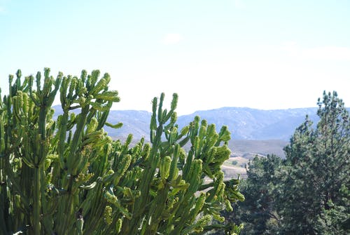 Green succulent bushes against rocky highlands
