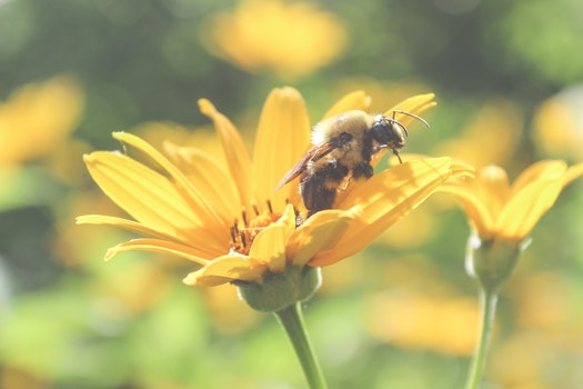 Kostenloses Stock Foto zu natur, gelb, frühling, blume
