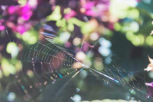 Kostenloses Stock Foto zu natur, lila, frühling, grün