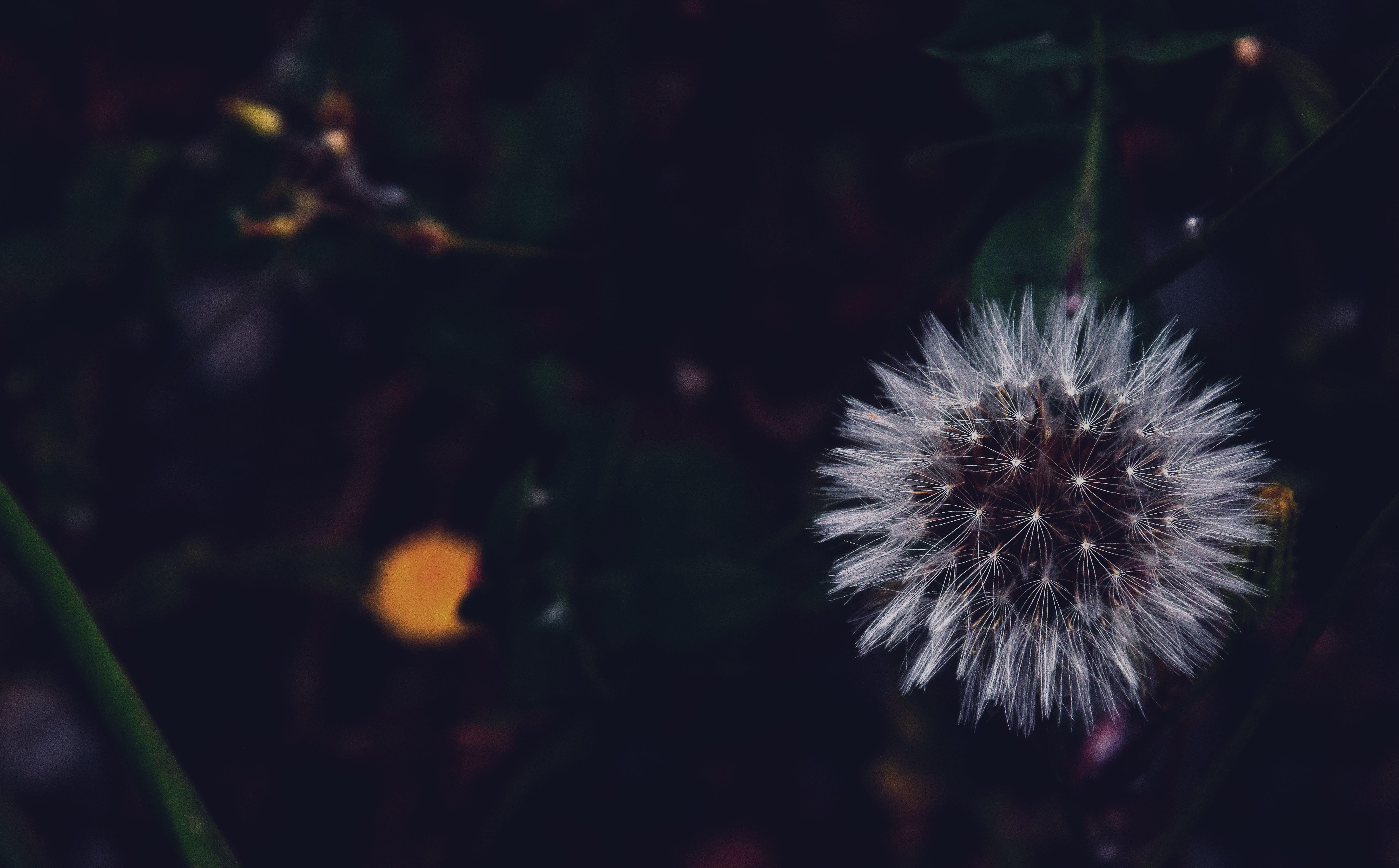blur, close-up, color
