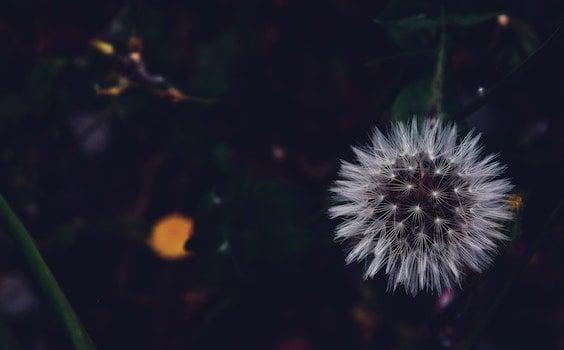 Free stock photo of night, dark, plant, evening