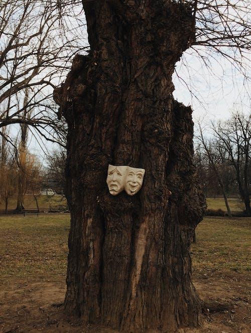 アート, シーズン, トランク, パークの無料の写真素材