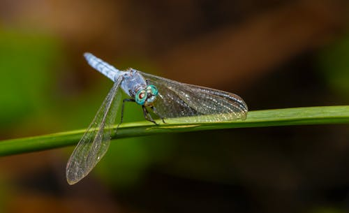 Dragonfly on Green Leaf in Close Up Photography