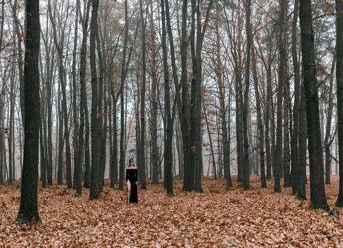 Person in Black Dress Walking on Brown Dried Leaves on Forest