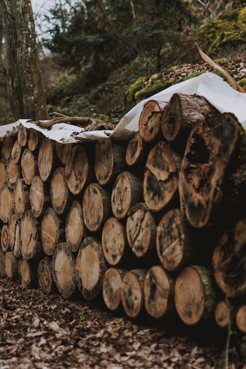 Ảnh lưu trữ miễn phí về ban ngày, cây, cây thông, cây xanh