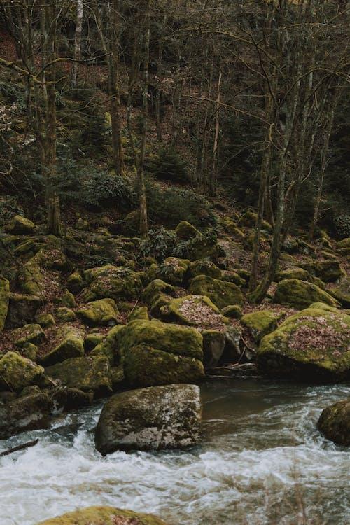 Photo Of Rocks Beside Stream