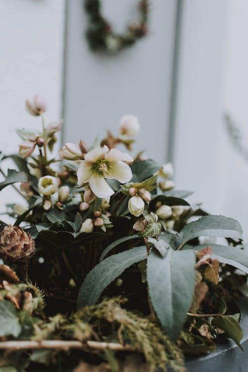 Безкоштовне стокове фото на тему «бруньки, весняні квіти, делікатний, завод»