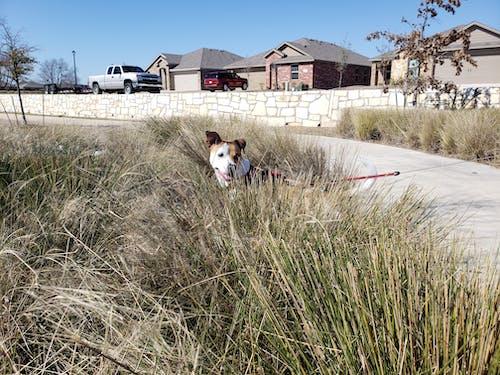 개, 개와 자연, 바보, 반려동물의 무료 스톡 사진