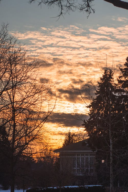 Free stock photo of golden, golden hour, sunset, winter