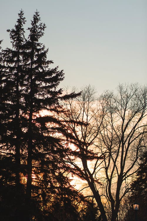 Free stock photo of sunset, trees, winter, winter trees