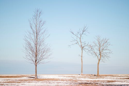 Free stock photo of blue sky, chicago, trees, winter