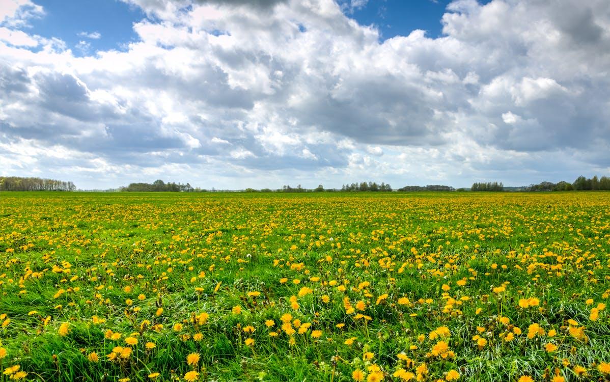 farma, flóra, hřiště