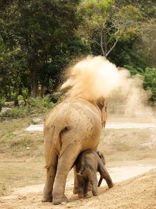 Brown Elephant Walking on Dirt Road