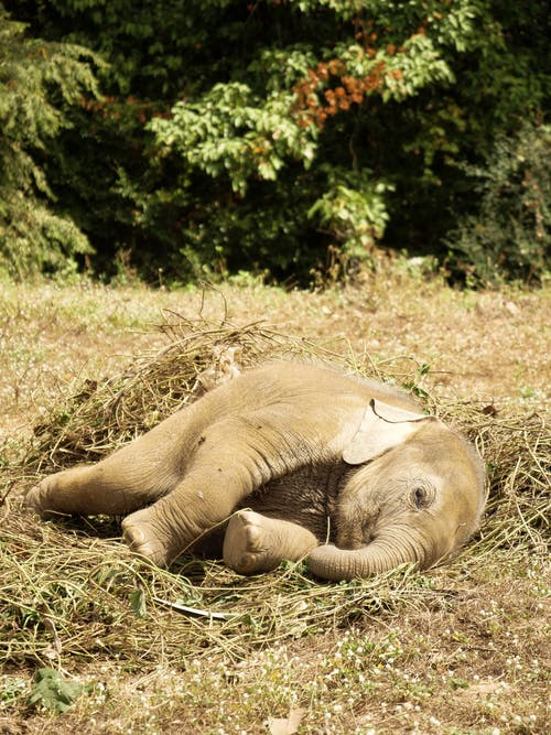 Photo Of Baby Elephant Laying On Grass