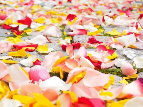 Assorted-color Flower Petal Lot on Concrete Surface