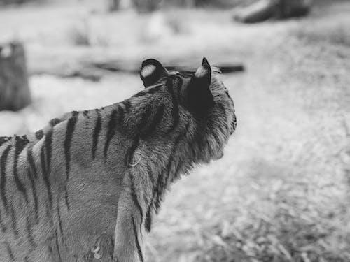 Gratis lagerfoto af dyr, dyreliv, fauna, fristed