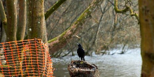 Foto d'estoc gratuïta de aigua, arbre, bosc, Corb