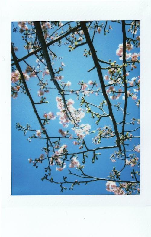 instax, 拍立得, 日文 的 免費圖庫相片