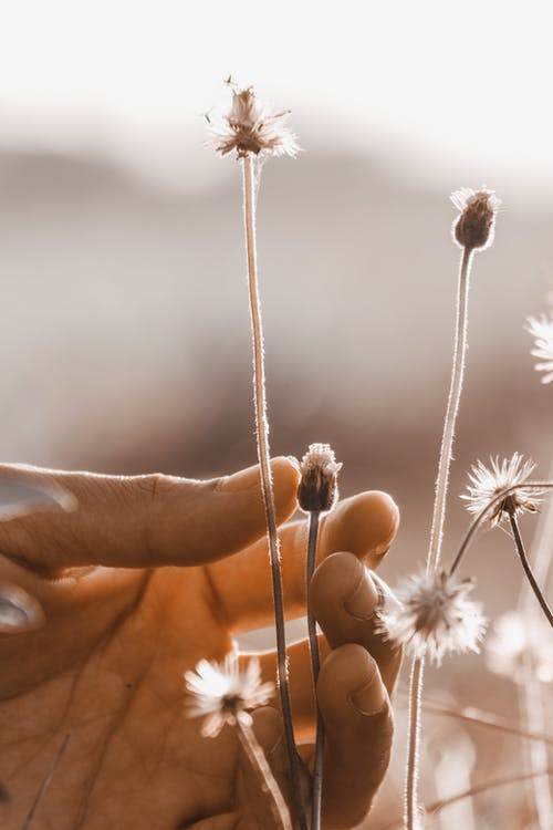 White Flower in Persons Hand
