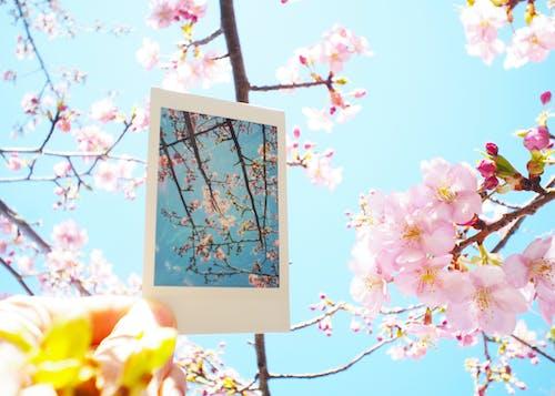 instax, 櫻桃, 藍色 的 免費圖庫相片