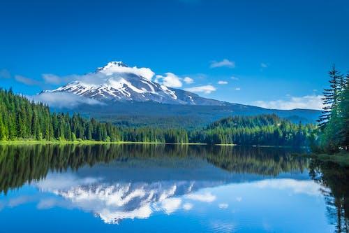 Kostnadsfri bild av barrträd, berg, bergskedja, bergstopp