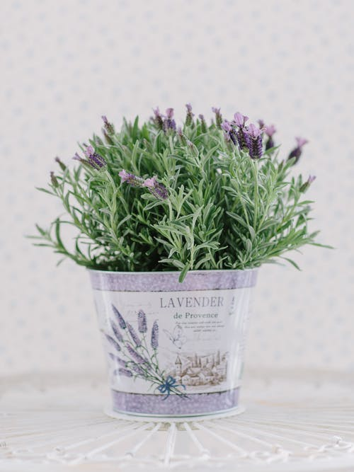 Free stock photo of aromatic, background, beauty, blue