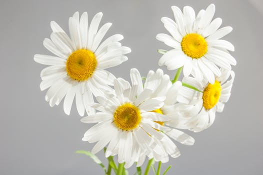 Free Stock Photo Of Flowers Sunflowers Vase