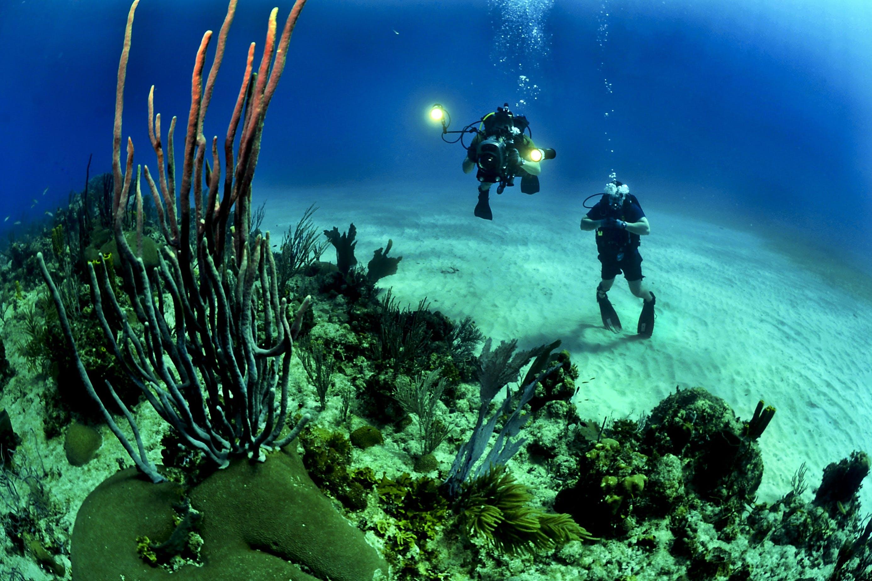2 Scuba Diver Underwater