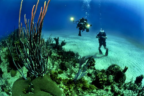 The Advantages Of Scuba Diving That You Should Know