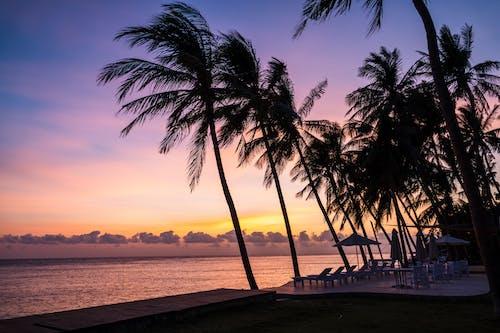 Ilmainen kuvapankkikuva tunnisteilla aamu, auringonnousu, aurinko, dramaattinen