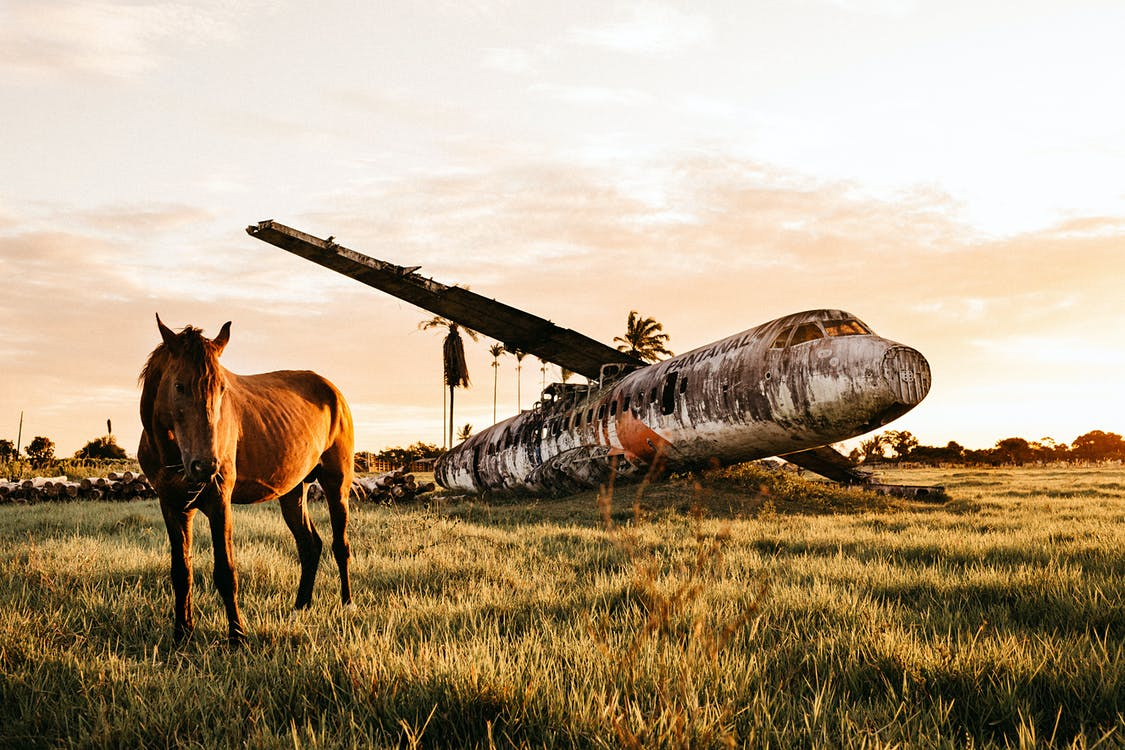 Warm blooded purebred stallion standing on pasture near dirty plane after having accident in countryside at colorful sundown