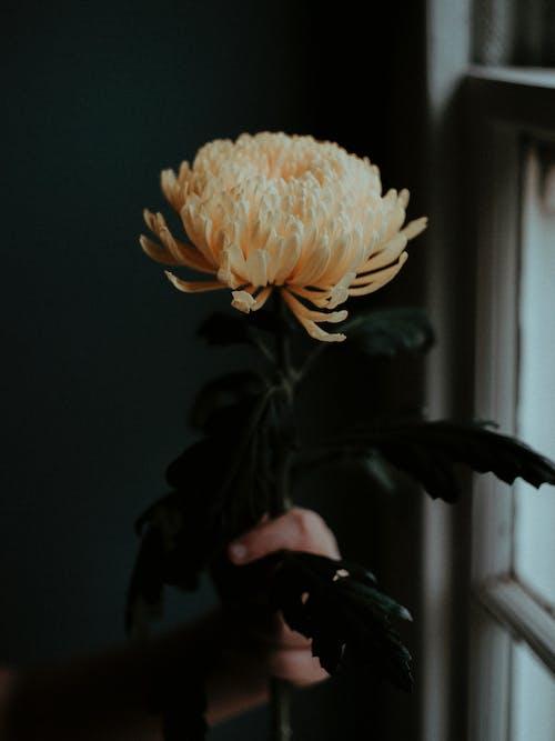 Δωρεάν στοκ φωτογραφιών με ανάπτυξη, ανθίζω, ανθισμένος, βάθος πεδίου
