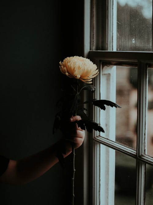 Photo Of Person Holding Flower