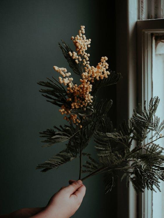 Photos gratuites de à l'intérieur, anonyme, appartement