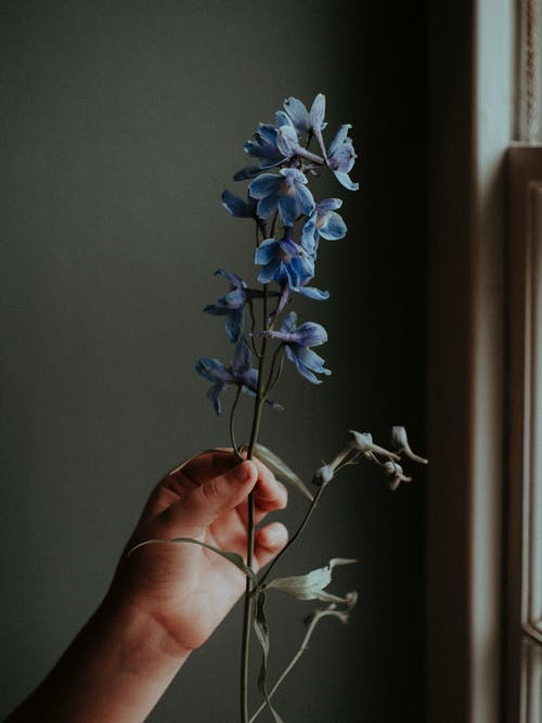 Photo Of Person Holding Blue Flower
