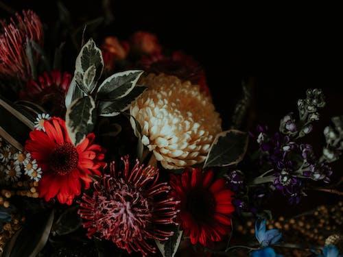 Kostenloses Stock Foto zu blühen, blumen, blumengesteck, blumenhintergrund