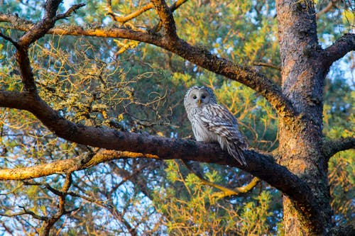 Photo of White and Brown Owl Perched on a Tree Branch