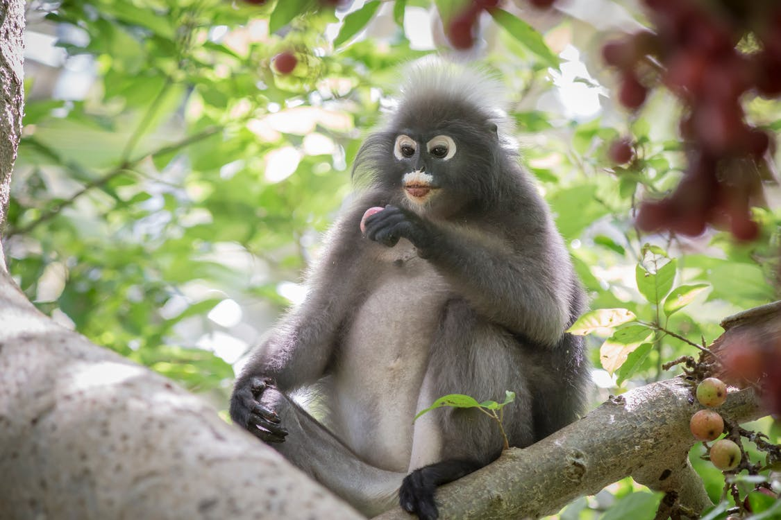 棕色的猴子,坐在樹枝上