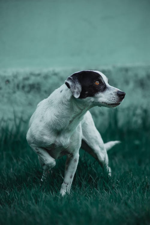 Photo of Dog On Grass Field