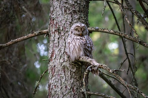 Darmowe zdjęcie z galerii z drzewo, dziki, mięsożerca, obserwowanie ptaków